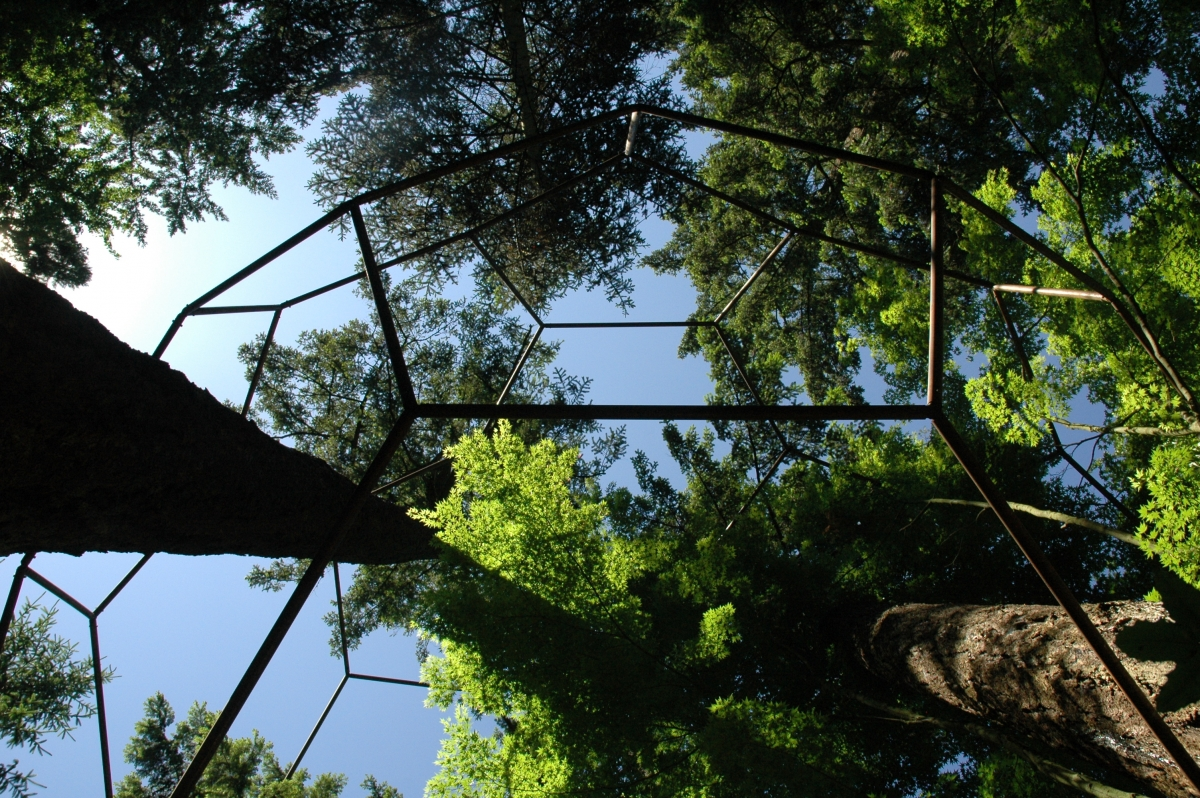 Quantum Reality (Large Buckyball Around Trees)